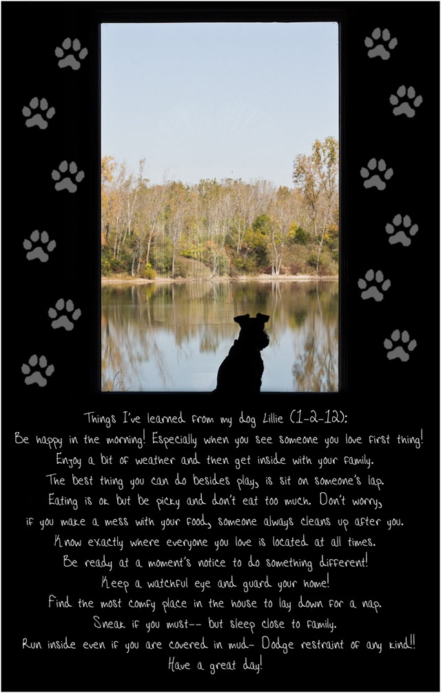 Lessons from a dog - Cedar Key